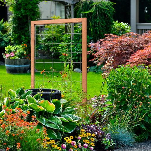 Wooden trellis with metal grid offers support for climbing plants and flowers